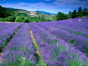 Vakantiehuis in de Provence